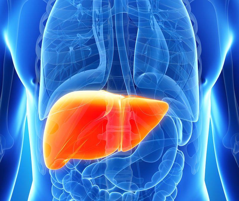 肝臓,隠れ脂肪肝,脂肪肝,40代女性,50代女性,閉経後